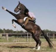 Ten koń tak ma