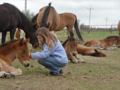 Imprinting u koni na wolności