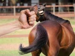 Wpływ napięcia emocjonalnego na interakcję z koniem